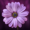 Calming flower Tapping Solution